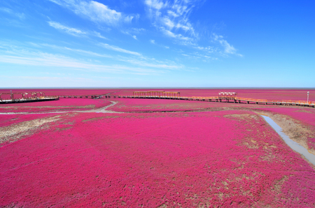 Panjin red beach, Liaoning, China Stok Fotoğraf