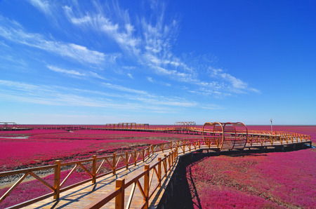 Panjin red beach, 랴오닝, 중국 스톡 콘텐츠