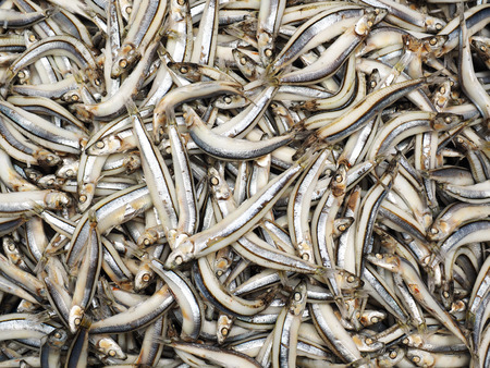 A pile of boiled silver anchovy in the fish market Stock Photo