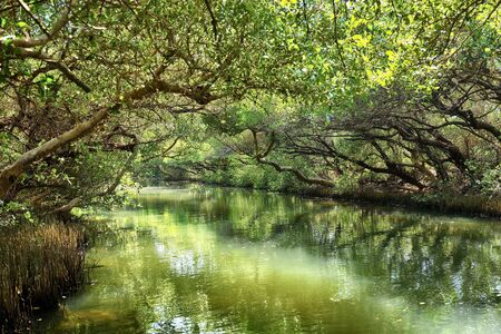 Sicao Mangrove Green Tunnel, also known as Taiwan's own modest version of the Amazon River.