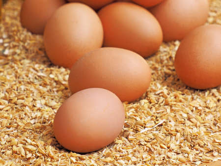 Close up of raw brown eggs