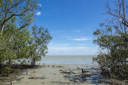 Mangrove swamp in the tropical beach, Setiawan, Malaysia