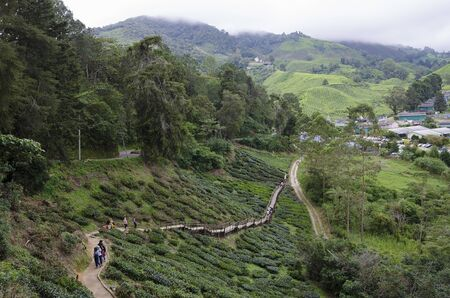Walk way leading to Sungai Palas BOH Tea House, one of the most visited tea house by tourists in Cameron Highland, Malaysia