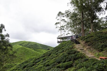 Sungai Palas BOH Tea House, one of the most visited tea house by tourists in Cameron Highland, Malaysia