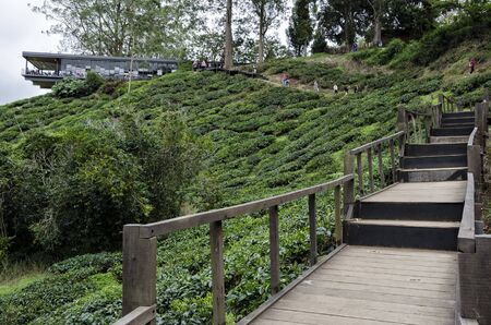 Walk way leading to Sungai Palas BOH Tea House, one of the most visited tea house by tourists in Cameron Highland, Malaysia - BOH Tea Plantation at Sungai Palas, Brinchang Cameron Highlands, Malaysia