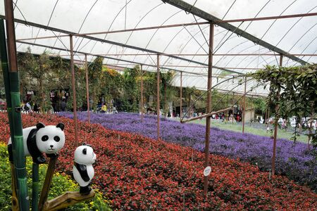 Colorful field of lavender and flower species in Lavender Garden in Cameron Highland, Malaysia.