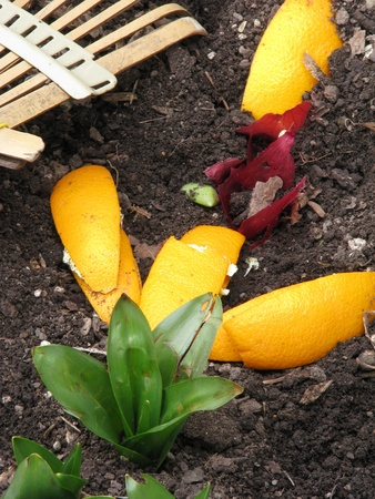 organic waste: Composting is green   Concept  composting helps keep the environment cleaner and is productive