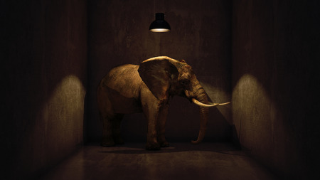 elephant in the room near wall. Creative concept. 3d rendering 版權商用圖片