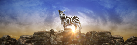 zebra at sunset. 3d render
