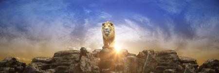 Lion at sunset. 3d render
