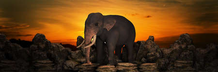 Elephants at sunset. 3d render 免版税图像