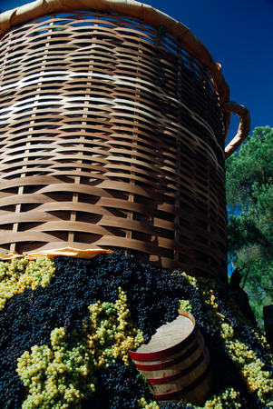 Wood barrell with bunches of wine grapes. Festa dellUva, Impruneta. Tuscany Chianti wine festival, Italy