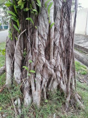 trunk  tree: Tronco de �rbol viejo
