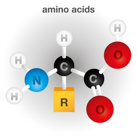 amino: Illustration representing a composition and structure of the amino acid chemical element, ideal for educational books and institutional material