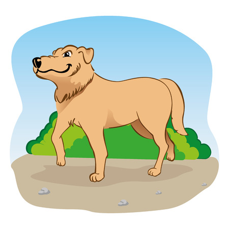 spaying: Illustration representing a Labrador dog walking in the park.