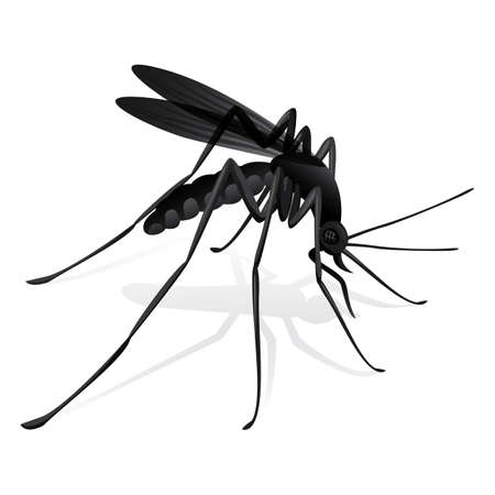 infected mosquito: Nature mosquitoes stilt disease transmitter. Ideal for informational and institutional sanitation and related care
