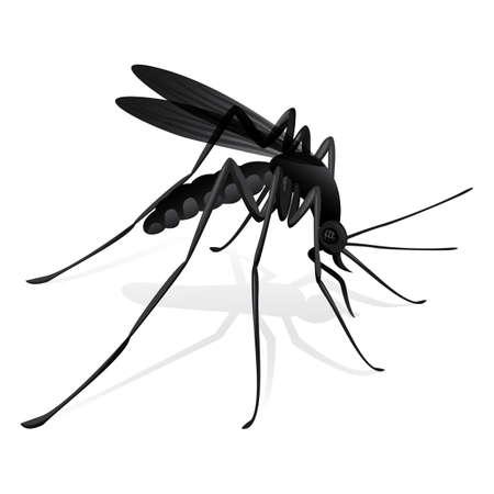 sanificazione: Zanzare Natura palafitta trasmettitore malattia. Ideale per risanamento informativo e istituzionale e la cura relativi
