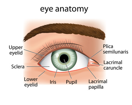Illustration of a close and the human eye. Ideal for medical supplies and inditucionais