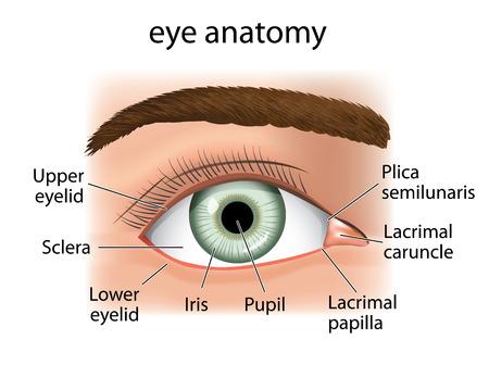 miopia: Illustrazione di una stretta e l'occhio umano. Ideale per forniture mediche e inditucionais
