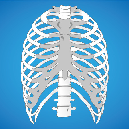 rib cage: Illustration First Aid Anatomy human rib cage. Ideal for catalogs and informative medical guides
