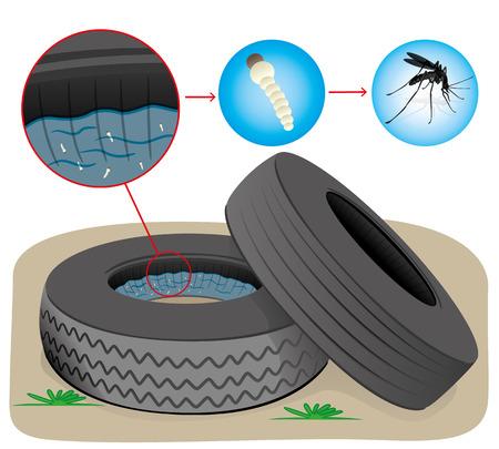 mosca: Naturaleza neum�ticos con agua estancada con los mosquitos cr�a de moscas. Ideal para el saneamiento informativo e institucional y la atenci�n relacionada