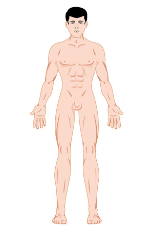 guides: Illustration representing Maculino Human Body Anatomy. Ideal for catalogs, information and first aid guides