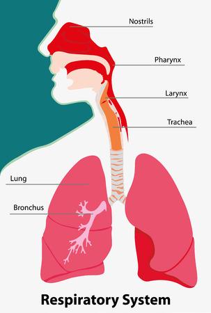 호흡기 시스템 해부학을 나타내는 그림 지구의 척추 동물 일러스트
