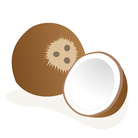 coconut fruit: Illustration of an icon coconut fruit. Ideal for educational and institutional materials