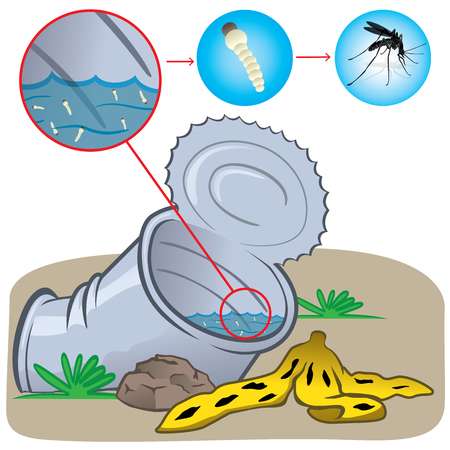 mosquitoes: Nature, can with standing water with a focus of mosquitoes mosquito. Ideal for informational and institutional related sanitation and care