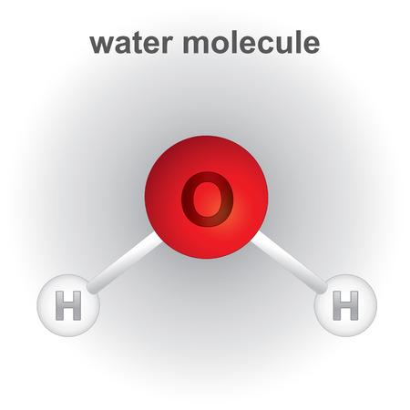 water molecule: Ilustraci�n que representa la estructura y la composici�n qu�mica de la mol�cula de agua. ideal para libros y materiales educativos institucionales