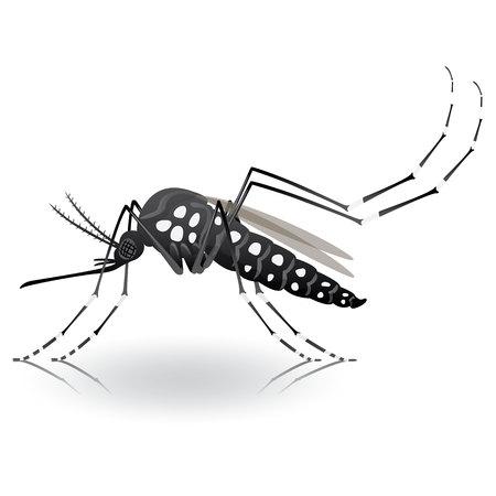 fiebre: Naturaleza, Aedes aegypti zanco de mosquitos. Ideal para el saneamiento y la atención relacionada con el informativo e institucional