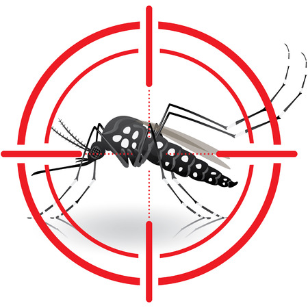 water sanitation: Nature, Aedes aegypti mosquitoes with stilt target. sights signal. Ideal for informational and institutional related sanitation and care