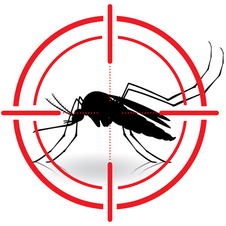 yellow fever: Nature, Aedes aegypti mosquitoes with stilt target. sights signal. Ideal for informational and institutional related sanitation and care