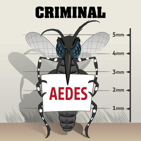 jail: Aedes aegypti mosquitoes sting in jail, holding poster. Ideal for informational and institutional related sanitation and care
