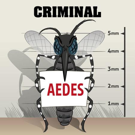 carcel: Aedes aegypti pican en la cárcel, que sostiene el cartel. Ideal para el saneamiento y la atención relacionada con el informativo e institucional Vectores