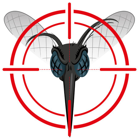 Nature, Aedes aegypti mosquito with stilt sights signal or target, Front head