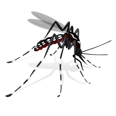 ヒトスジシマカ ネッタイシマカ蚊マスコット高床式  イラスト・ベクター素材