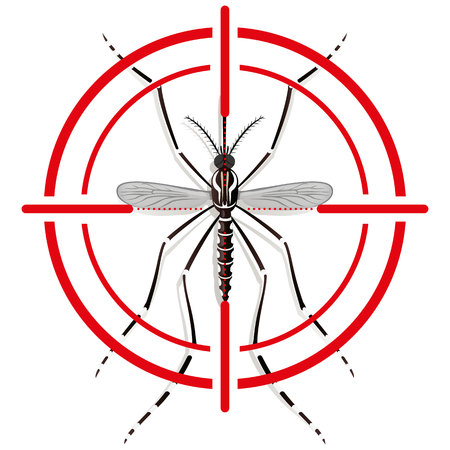 aedes: Nature, Aedes Aegypti mosquitoes stilt with sight signal or target, top view. Ideal for informational and institutional related sanitation and care Illustration