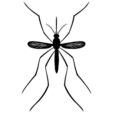 yellow fever: Nature, Mosquito silhouette stilt, top view. Ideal for informational and institutional related sanitation and care Illustration