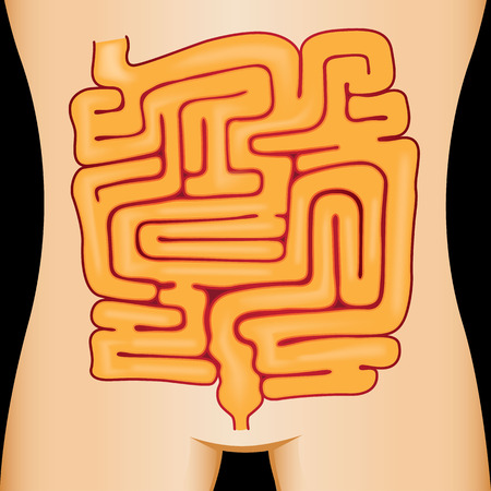 input output: Illustration of the human body stomach maze. ideal for educational materials and interactive