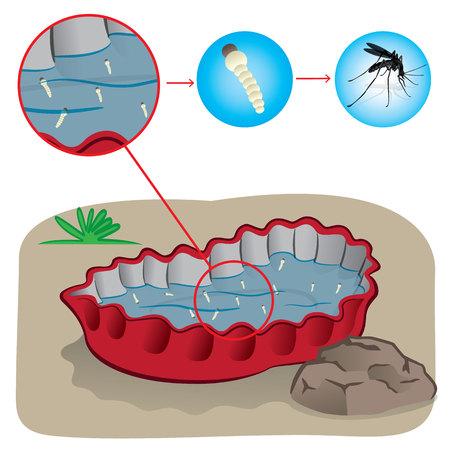 contaminacion del agua: Naturaleza, tapa de la botella con agua estancada con los mosquitos de enfoque picadura. Ideal para el saneamiento y la atención relacionada con el informativo e institucional Vectores