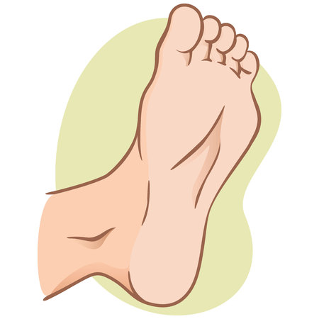 body part illustration, plant or sole of the foot, caucasian. Ideal for catalogs, informational and institutional materials