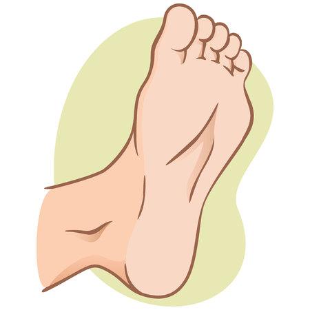 Körperteilillustration, Pflanze oder Fußsohle, kaukasisch. Ideal für Kataloge, Informations- und institutionelle Materialien