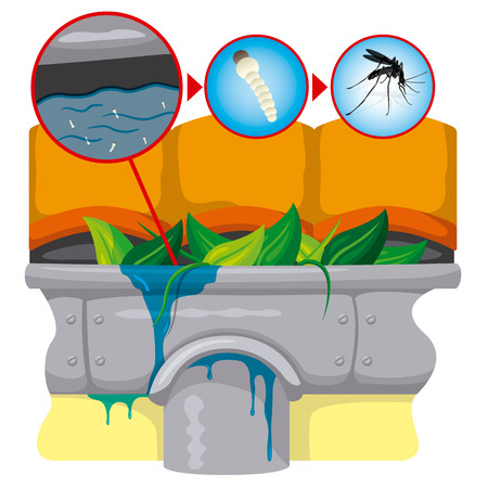 gutter: Nature, gutter with still water with mosquitoes stilt focus. Ideal for informational and institutional related sanitation and care