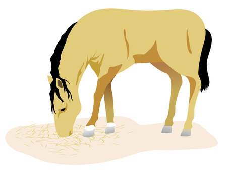locomotion: Animal illustration a horse, equine. Ideal for catalogs and livestock materials
