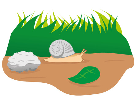 Illustration animal nature garden snail, mollusc. Ideal for catalogs and educational materials Illustration