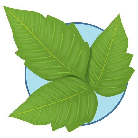 Illustration representing Nature Plant Poison Ivy