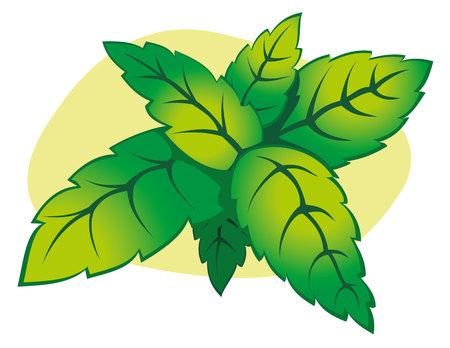 crocket: Illustration branch of mint leaves. Ideal for decorative and natural materials Illustration