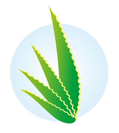 Illustration nature plant Aloe vera. Ideal for catalogs of botanicals and medicinal materials
