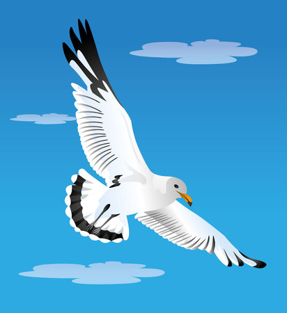 Illustration of a seagull flying bird gliding in the blue sky. Ideal for ecosystem materials and marine life Illustration